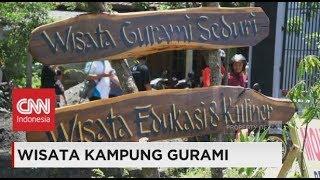Download Video Wisata Kampung Gurami MP3 3GP MP4