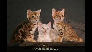 In celebration of the Bengal Cat and in memory of the unwanted cats Thumbnail
