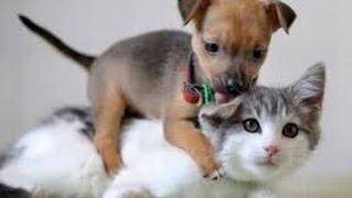 ❤Los Videos más tiernos de gatitos 2016❤ Perritos cachorros conociendo gatos :)