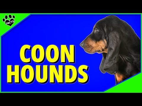 Top Coonhound Breeds