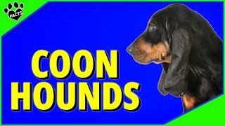 Top Coonhound Breeds