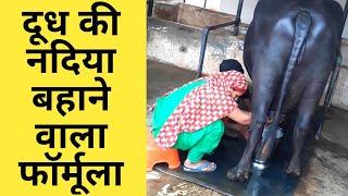 गाय भैंस का दूध बढ़ाने का ऐसा नुस्खा जो कोई नहीं बताता|Balanced feed Plan of dairy farm|पशु आहार