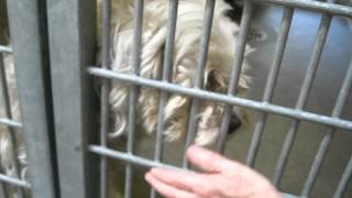 Adopted! Sweetest Blind Poodle/terrier Mix (a1338843) At North Central Shelter