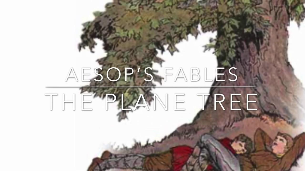 Tree-on-Life Filets de p/êche au Soleil pliants Cage de s/échage Cage carr/ée de Poissons de Soleil Cage de Filet de Soleil Cage /à moustiques Filet de p/êche /à Sec