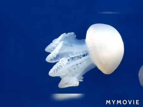 Dubai  Aquarium & Underwater Zoo| Dubai Mall |