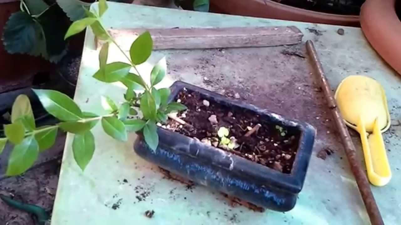 Giardinaggio Youtube