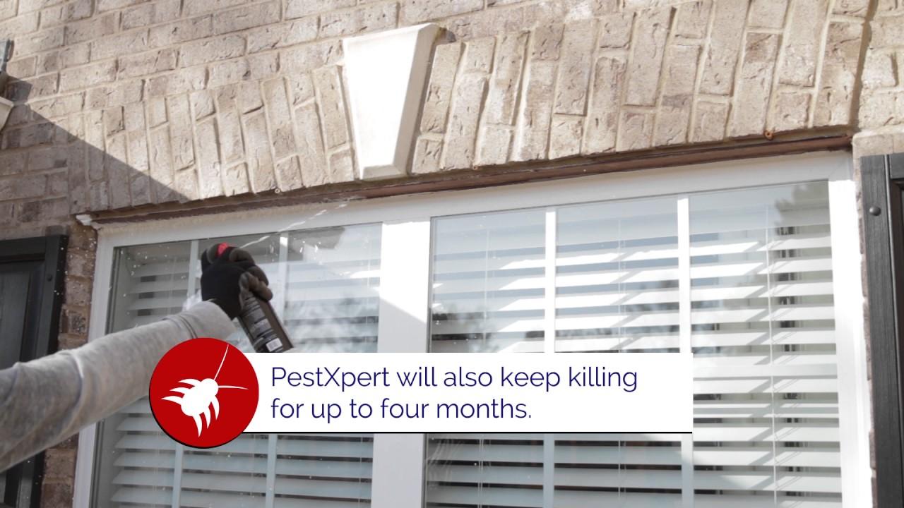 PestXpert Foaming Insect Killer