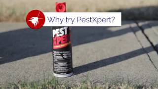 Why You Should Use PestXpert Foaming Insect Killer Spray