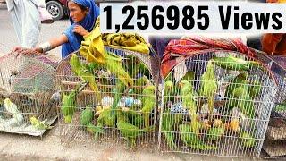 Birds Market Lalukhet Karachi 19-8-2018