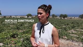 Winemaking in Santorini - Teaser