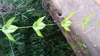 Gambar cover How to make palm South Indian style of flower (coconut tree leaf)