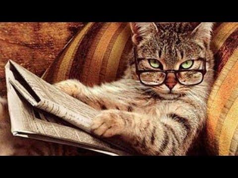 10 Самых умных пород кошек