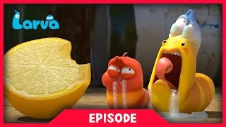 larva - lemon  2017 cartoon movie  cartoons for children    larva official