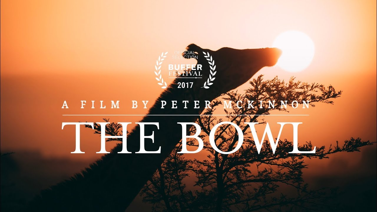 The Bowl