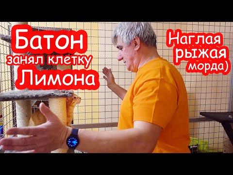 Уборка в клетке Лимона без Насти