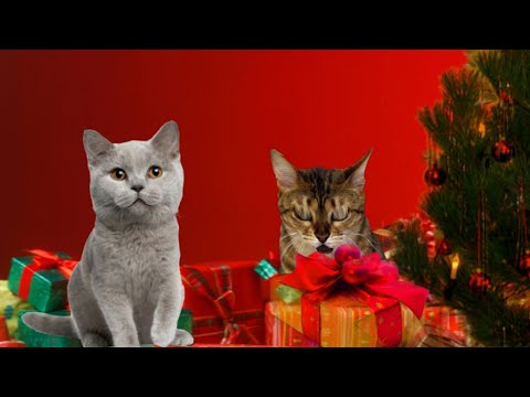 "Singing Cats - Cat sings ""O Christmas Tree"" 