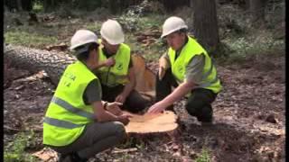 W Dechę - świetny film edukacyjny o drewnie, który koniecznie musisz obejrzeć
