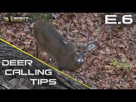 "Deer Calling Tips - E.6 ""Doe Bleats on Pre Rut Bucks"""