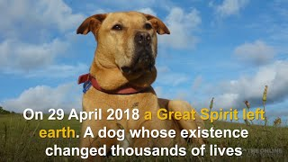 Tribute to an amazing dog by Doggy Dan