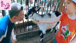 ВЛОГ удивительный Зоопарк  Кормим с папой козлят  Vlog Zoo  Детям о Животных