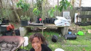 Repotting 2yr Old Avocado That Came From Our Compost Pile| Family Tree Planting