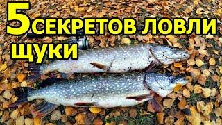 5 СЕКРЕТОВ ЩУКА В НОЯБРЕ щука в ноябре с берега щука осенью на спиннинг жор щуки осенью ЩУКА ОСЕНЬЮ