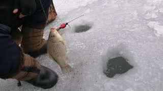 Ловили окуня а поймали карася Зимний карась со льда на мормышку Рыбалка в Запорожье 2021