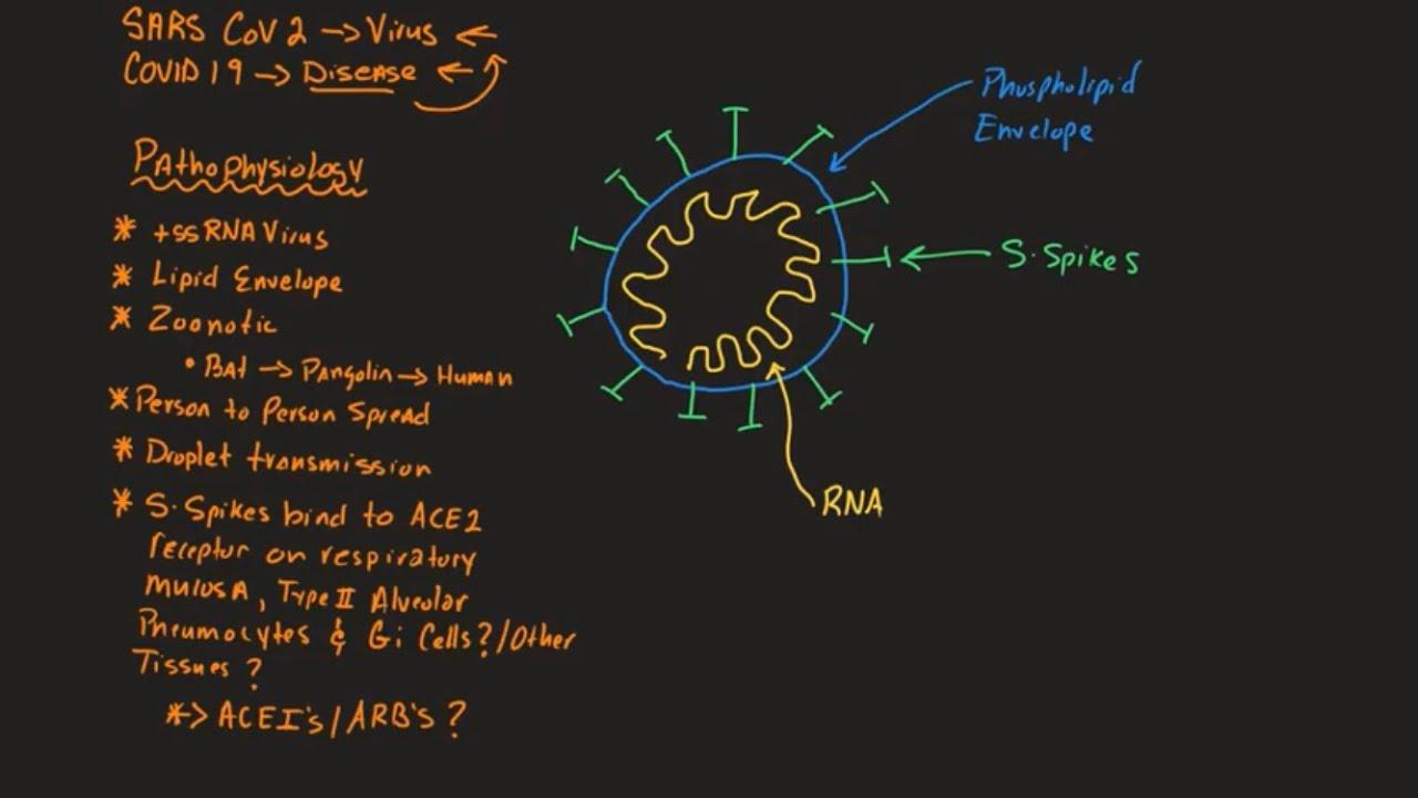 COVID 19 Part 1: Basic Pathophysiology