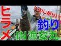 【ヒラメ祭り開催!?】初夏のヒラメ釣りIN漁安丸 の動画、YouTube動画。