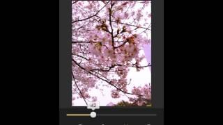 無料アプリFotorでできる逆光簡単修正【桜】さくら画像