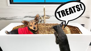 We Surprised our Dogs with 1,000,000 Treats to See Their Reaction! PawZam Dog
