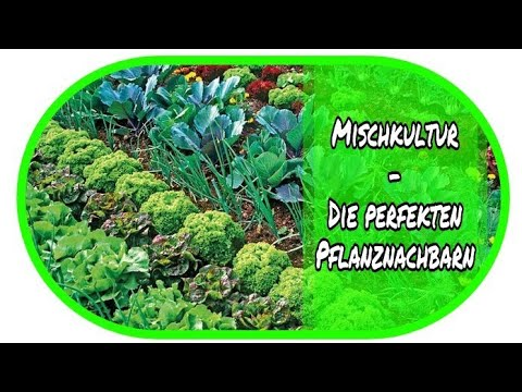 Mischkultur Die Perfekten Pflanznachbarn Garten Beete
