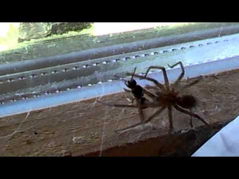 Spider V Wasp Battle