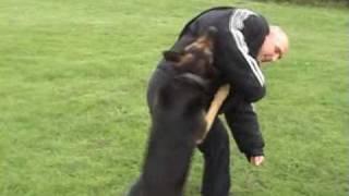 K9 Xena Protection Dog Bite Jacket Training
