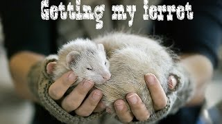 Getting my ferret at petco