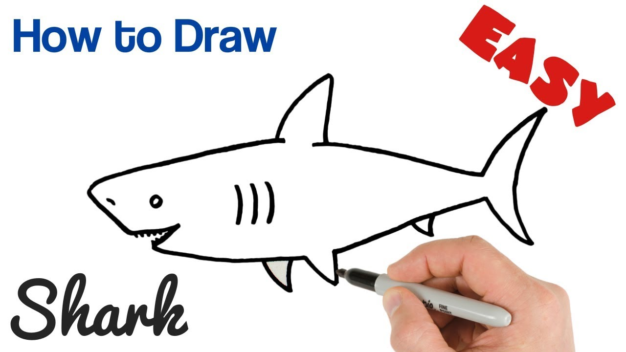 How To Draw A Shark Easy Step By Step Youtube