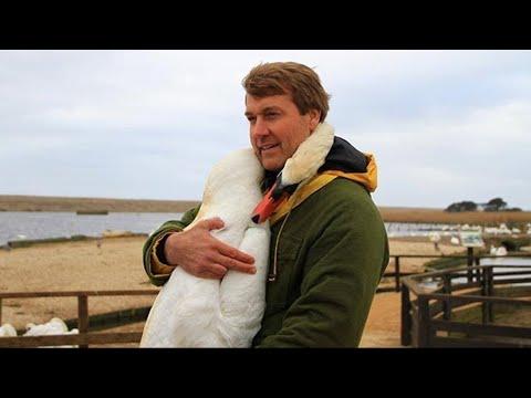 Мужчина спас лебедя и в благодарность птица сделала то, что никто не ожидал