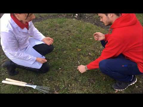 Как защитить газон от мха