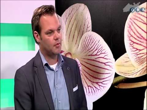 Shawn Harvey and B57-Or6 tv Netherlands 2014