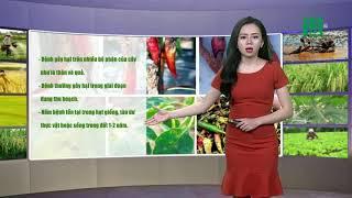 Thời tiết nông vụ 21/10/2018:Lai Châu, Điện Biên sẽ có những điểm nhiệt độ cao 32-33 độ | VTC14