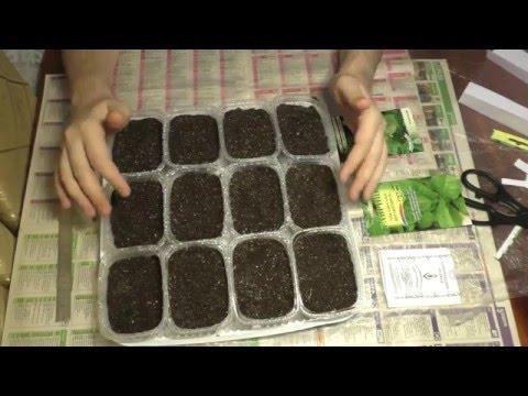 Выращивание табака в домашних условиях. Посев.