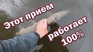 НА ЧТО ПОЙМАТЬ ОСЕННЮЮ ЩУКУ Беспроигрышный Вариант ДЛЯ ЩУКИ в холодной воде Рыбалка на спиннинг