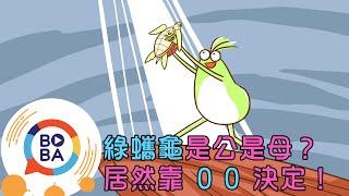 【扶拉格透可】蝦咪,綠蠵龜嫁不出去?原來是地球暖化惹得禍!
