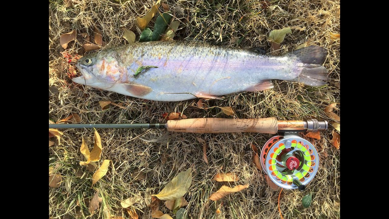 Fly fishing at cucamonga guasti regional park youtube for Guasti park fishing