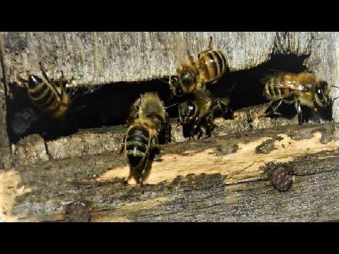 """Поймать Рой пчёл! От """"А"""" до """"Я""""."""