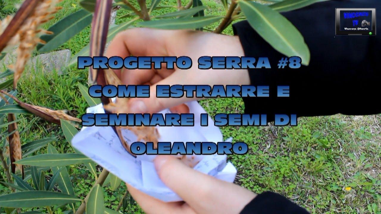 Fare Talee Di Oleandro progetto serra #8 come estrarre e seminare i semi di oleandro vincenzotv:  25-02-2018