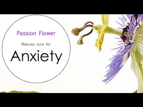Passion Flower benefits for Anxiety - Herbal Medicine