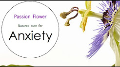 hqdefault - Is Passion Flower Good For Depression