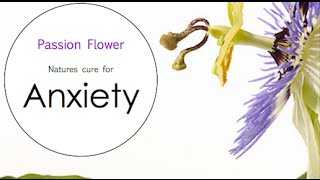 "Herbal Medicine for Anxiety with ""Passion Flower"""