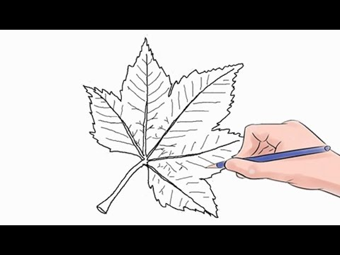 How To Draw A Leaf Easy Step By Step
